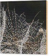 Dewy Seed Parachutes Wood Print