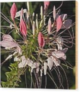 Diane's Flower Wood Print