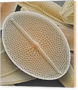 Diatom, Sem Wood Print by Power And Syred