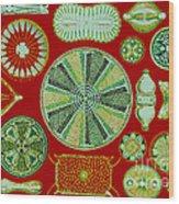 Diatoms-ernst Haeckel Wood Print