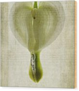 Dicentra Spectabilis Alba Wood Print