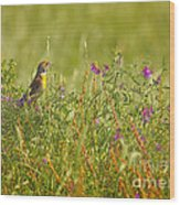 Dickcissel And Flowers Wood Print