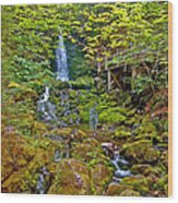 Dickson Falls In Fundy Np-nb Wood Print