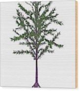 Dicroidium Prehistoric Seed Plant Wood Print