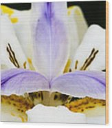 Dietes Grandiflora Close-up Wood Print