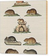 Different Kinds Of Mice Wood Print