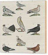 Different Kinds Of Pigeons Wood Print