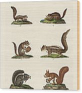 Different Kinds Of Squirrels Wood Print