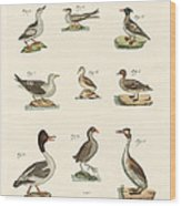 Different Kinds Of Waterbirds Wood Print