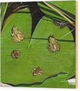 Different Stages Of Frog Growth Wood Print