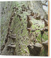 Difficult Climb Wood Print