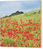 Digital Art Field Of Poppies Wood Print by Natalie Kinnear