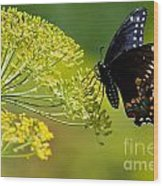 Dill And The Butterfly Wood Print