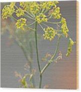 Dill Blossom Wood Print