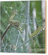 Dillweed And Caterpillars Wood Print