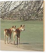 Dingo Duo Wood Print