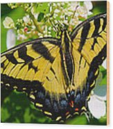 Dinner For The Swallowtail Wood Print