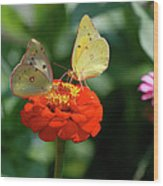 Dinner Table For Two Butterflies Wood Print