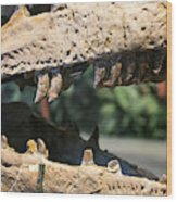 Dinosaur Jaws Exhibit Wood Print