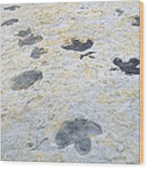 Dinosaur Tracks Wood Print