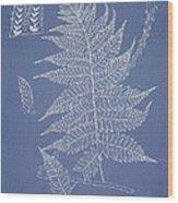 Diplazium Jerdoni Wood Print
