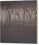 Disappearing Wood Print