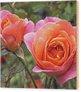 Disneyland Roses Wood Print
