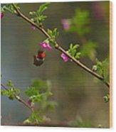 Distant Hummingbird Wood Print
