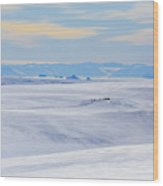 Distant View Of A Musk Ox And Snow Wood Print