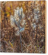 Ditch Beauty Wood Print