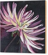 Diva - Dahlia Wood Print