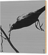 Dive Bombing Wood Print