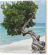 Divi Divi Tree In Aruba Wood Print