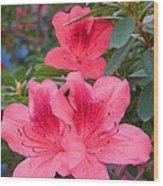 Divine Coral Azalea Wood Print