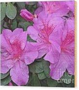 Divine Lilac Azalea Wood Print