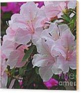 Divine Pink Azalea Wood Print