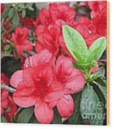 Divine Scarlet Azalea Wood Print