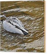 Diving Duck Wood Print by Kaye Menner