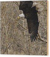 Diving Eagle Wood Print