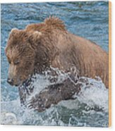 Diving For Salmon Wood Print