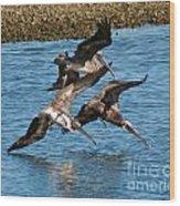 Diving Pelicans Wood Print