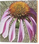 Divinity Gold - Echinacea Wood Print