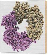 Dna Polymerase IIi Subunit Molecule Wood Print