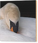 Do Not Disturb - Swan On Nest Wood Print