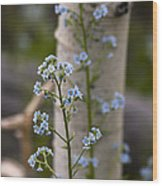 Do Not Forget Me Wood Print