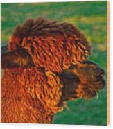 Do You Like My New Haircut Alpaca Wood Print