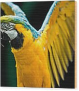 Do Your Exercise Daily Blue And Yellow Macaw Wood Print