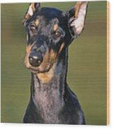 Doberman Pinscher Dog Wood Print