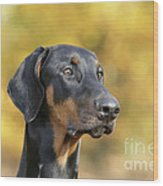 Dobermann Dog, In Autumn Wood Print