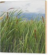 Dobie Swamp Tails Wood Print
